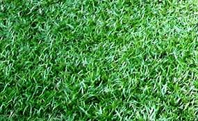 Green Lawn Grass Types Seed And Sod